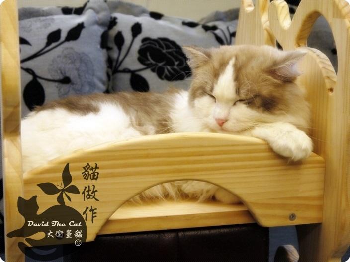 貓床角度06